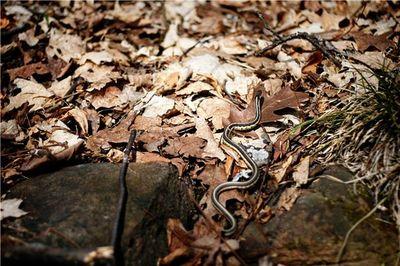 Snakewhisperer