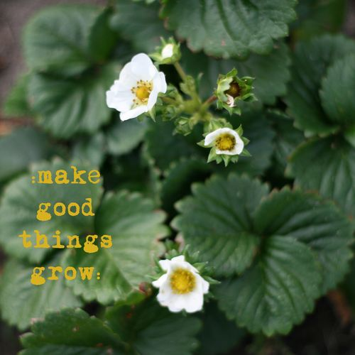 Make good things grow